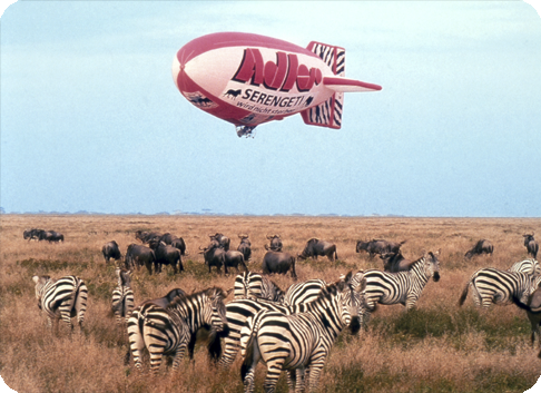 Gefa-Flug: Serengeti will not die